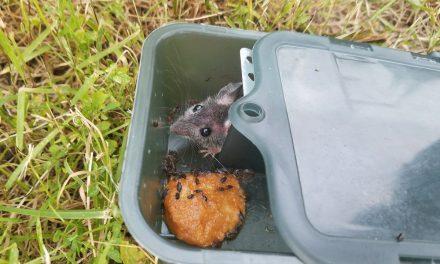 Как мы освободили мышь