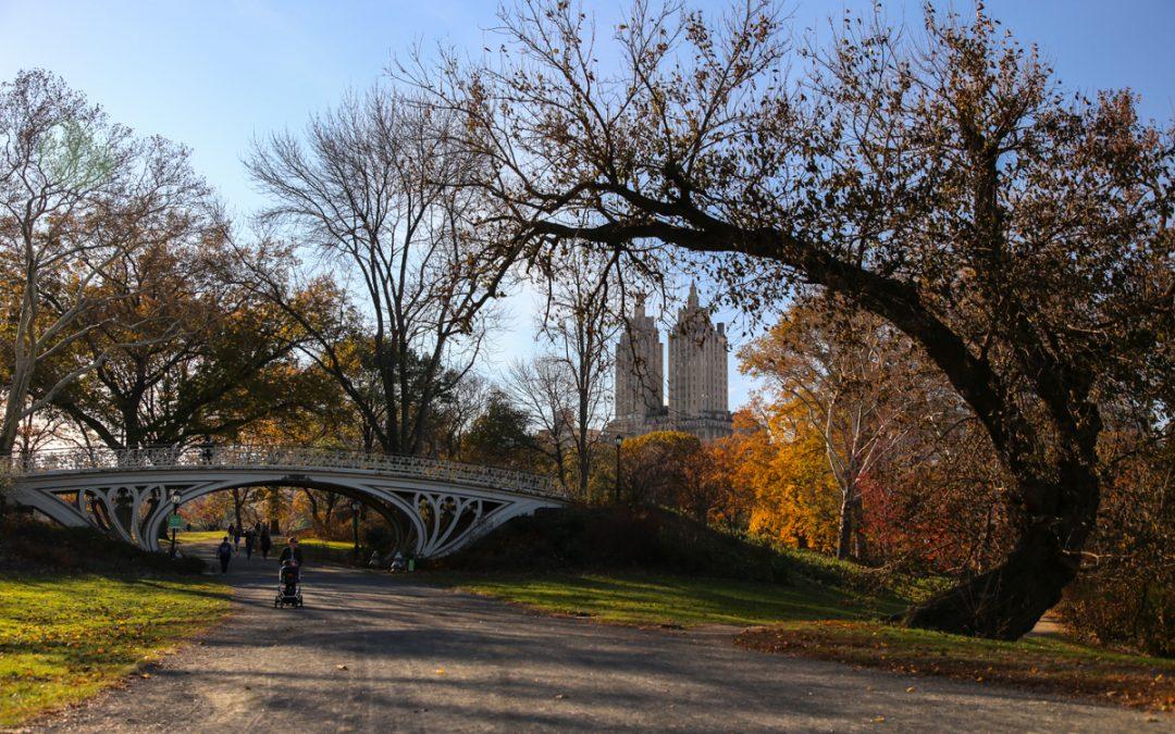 Центральный парк в ноябре