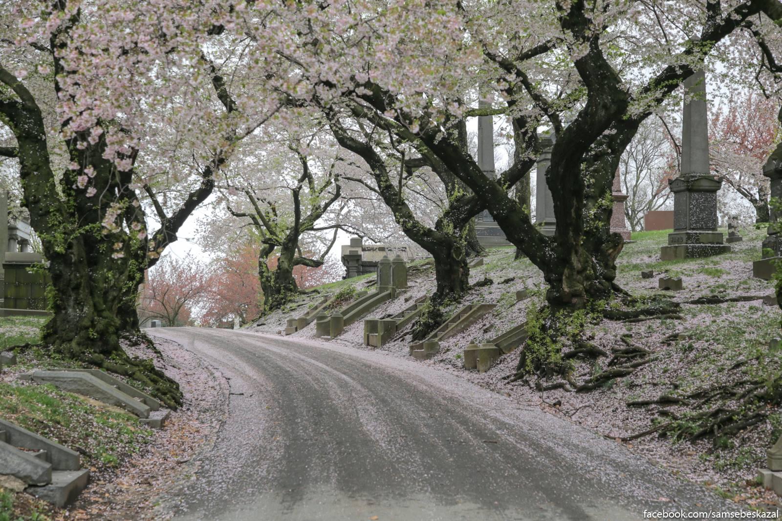 Весна на Гринвудском кладбище